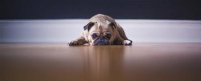 Dog fears hardwood