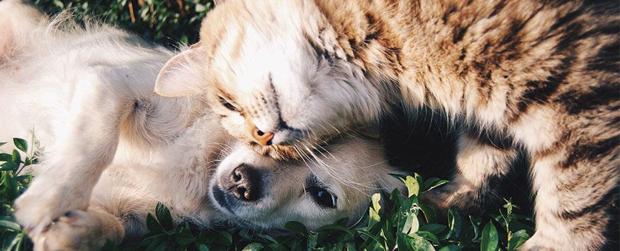 FAQ: How do I teach my dog to respect my cats?