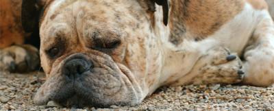 Sad Spinning Dog